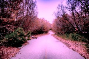 abandoned-road-in-woods
